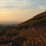 Weinberg oberhalb des Lustschlösschens